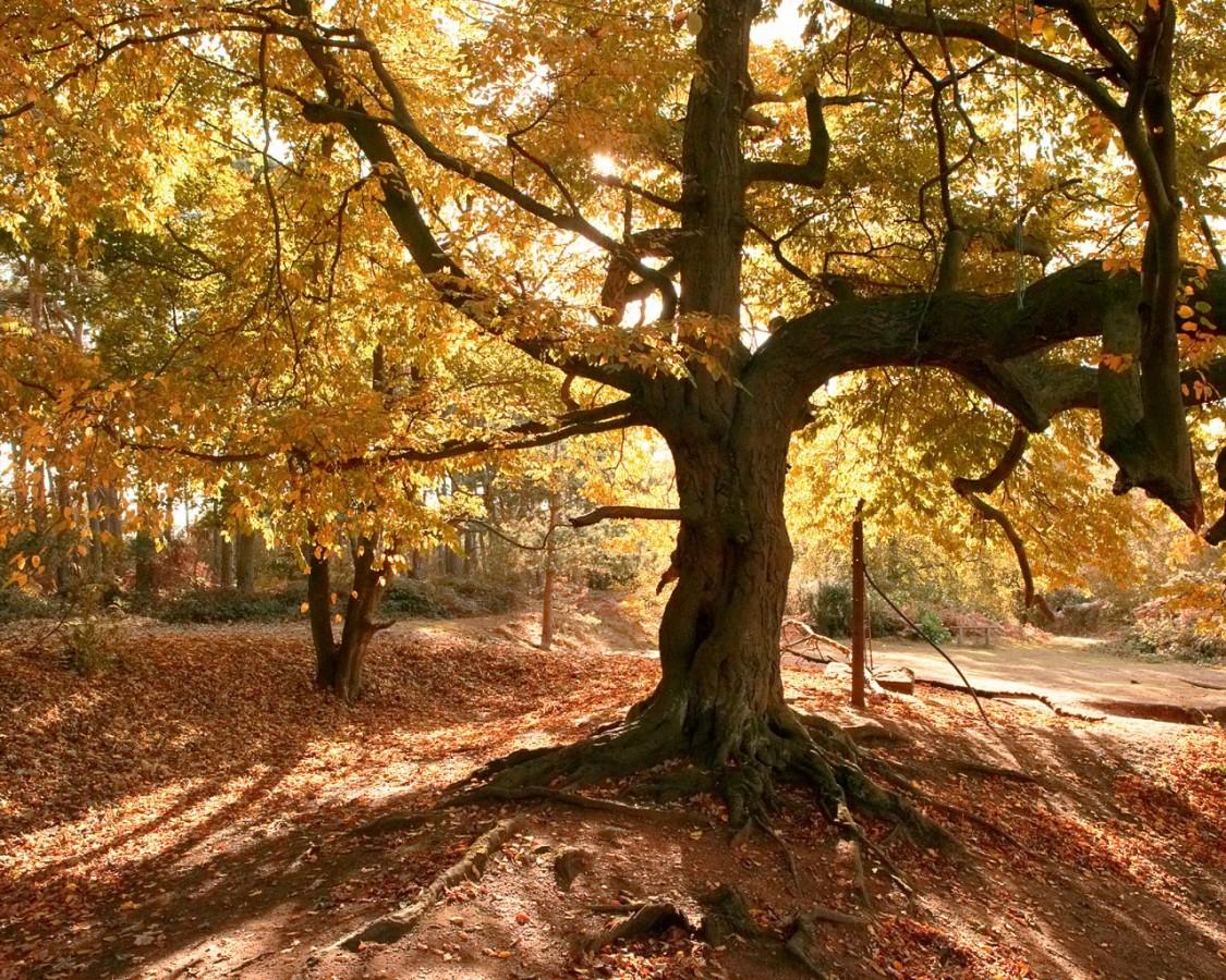 Vielen Dank, Jasoncook, für diesen schönen alten Baum!
