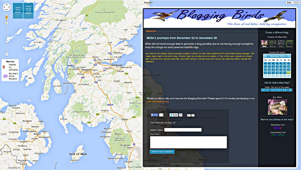 Blogging Birds: In Schottland scheint zu wenig Sonne, Vogel Millies Batterien sind leer.
